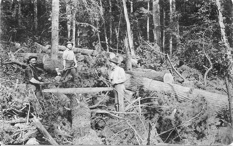 Preparing Logs for Removal