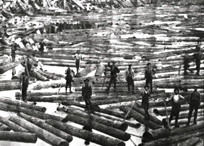 Logs in the River