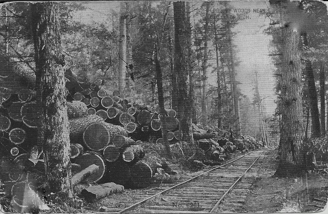 Logs Await Transport to Mills