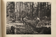 Cadillac-Lumber-Cummer-Workers-Cutting-A-Tree-Into-Logs-circa-1891