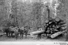 Cadillac-Lumber-Loading-Logs-Onto-Rail-Car