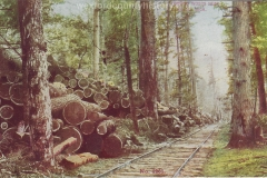 Cadillac-Lumber-Logging-Woods-Near-Cadillac-Michigan