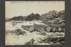 Cadillac-Lumber-Williams-Brothers-Company-Camp-Near-Harrietta-Log-Deck-at-Gassers-Siding-Cut-And-Hauled-By-Williams-Brothers-Company-Camp-21-Feb-28-1907