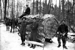 Mesick-Lumber-Huge-Log
