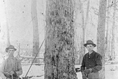 Harvesting a Tree