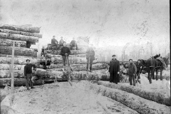 Harrietta Area Timber Harvesting