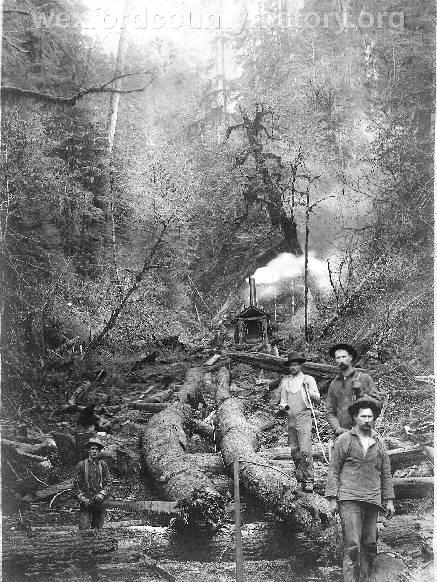 Wexford-County-Lumber-Timber-Harvest-Circa-1890s-5