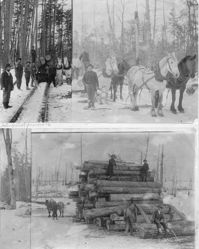 Timber Harvest Trilogy