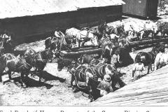 Cummer-Diggins Company Horses