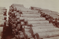 Cadillac-Lumber-Pile-Of-Logs-3