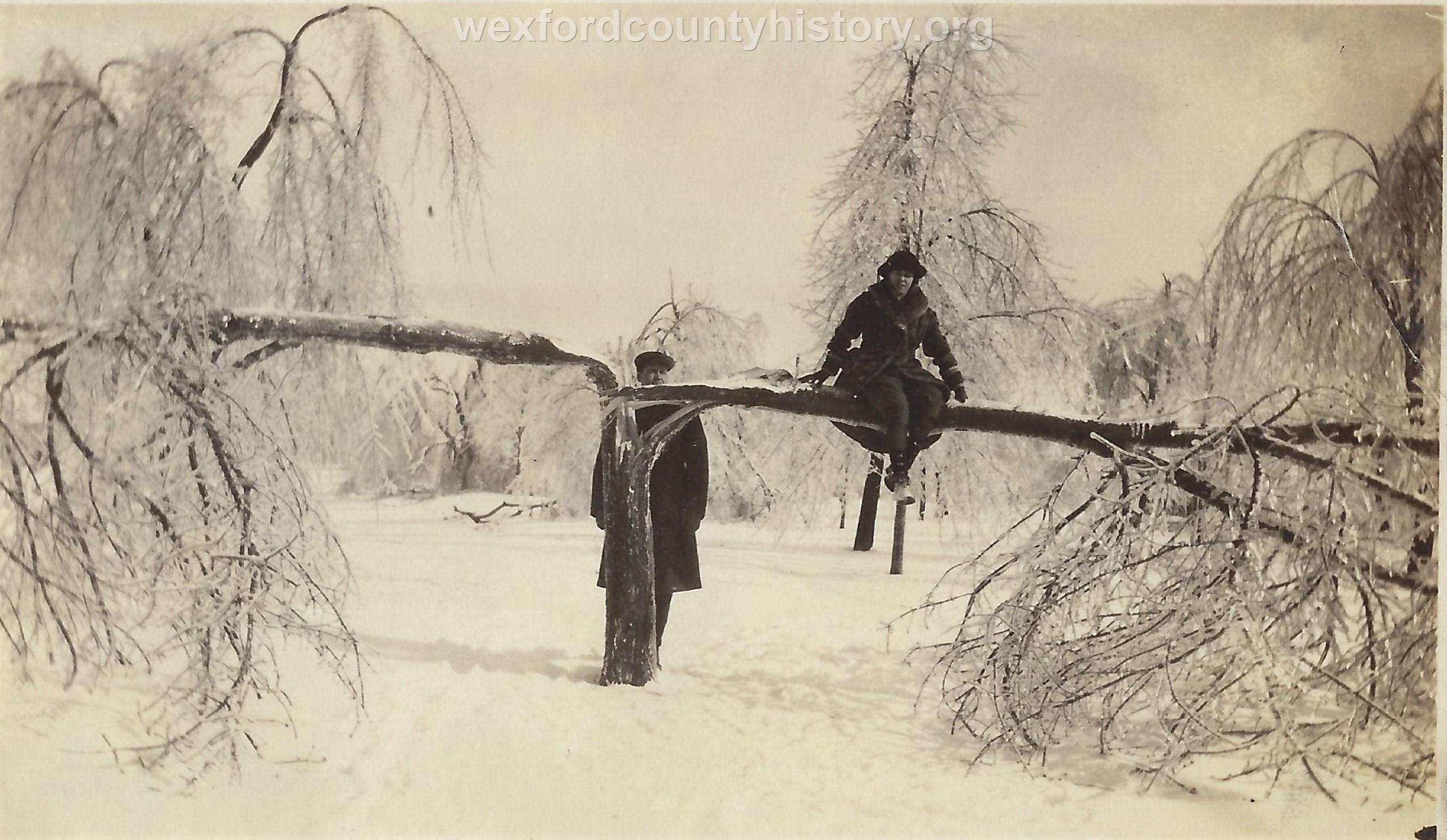 1922 Ice Storm - Tree