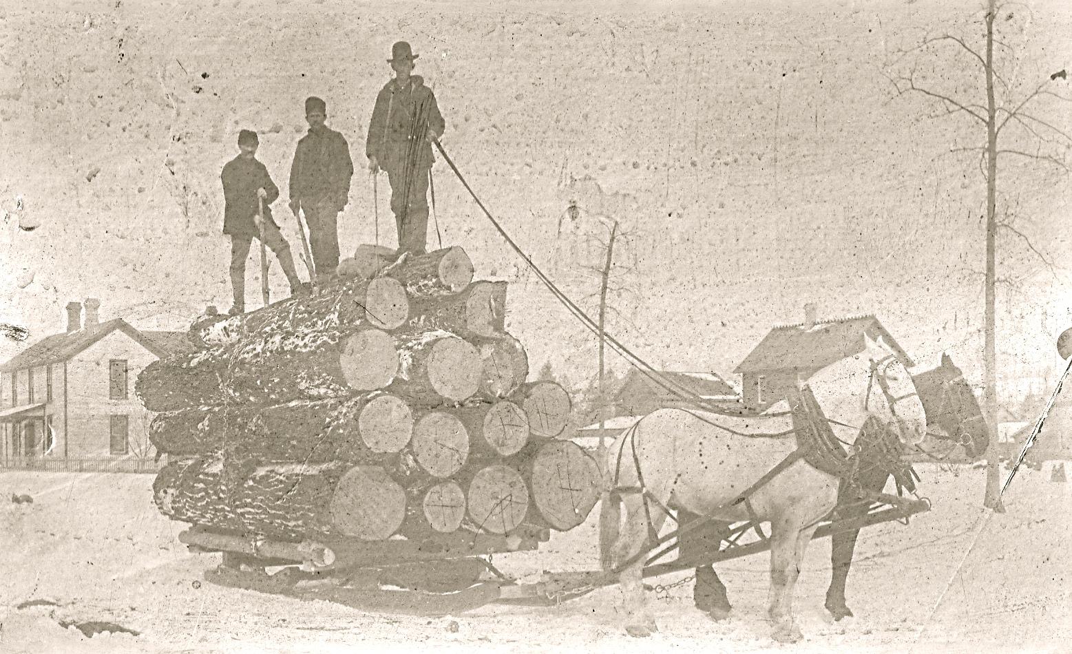 Harrietta Logging Activity